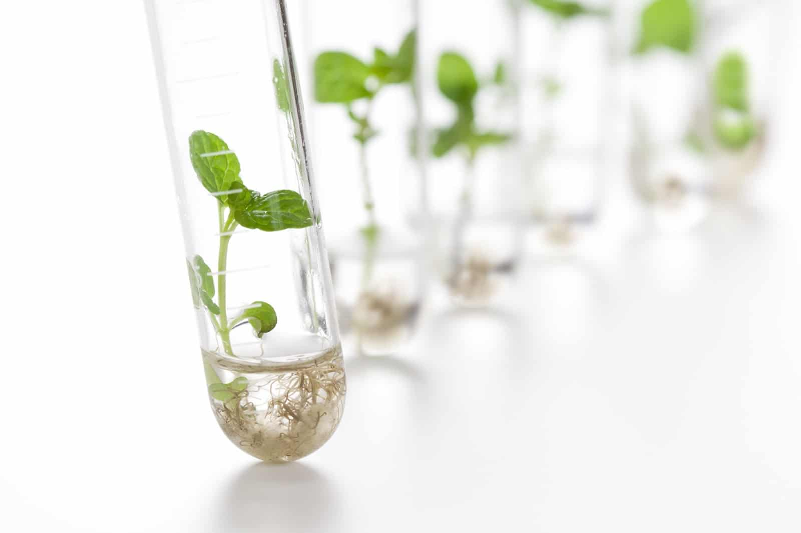 Historia-de-la-biotecnología 1